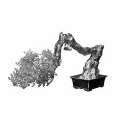 Bonsai - PASQUA PHILIPPE - Galeries Bartoux