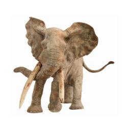 Le poids de l'ivoire - VAN DEN BERGHE - Galeries Bartoux