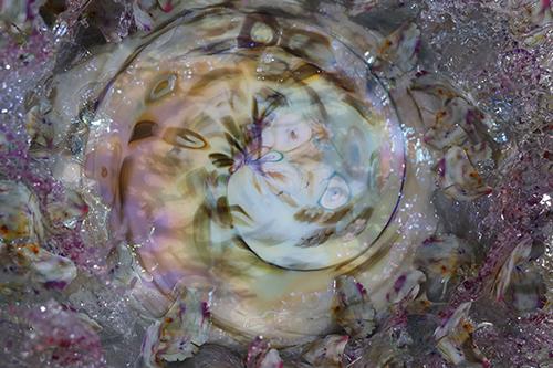 dream_ginkloMurrina_200_p13 - dream_ginkloMurrina_200_p13 - Galeries Bartoux
