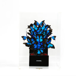 Chanel Saphir - FERAL ROMAN - Galeries Bartoux