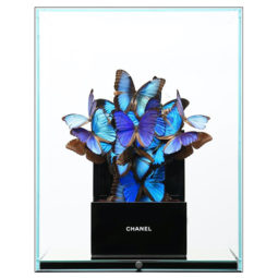 Chanel Shade of blue V - FERAL ROMAN - Galeries Bartoux